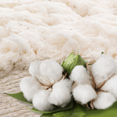Čístá bavlna